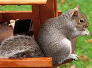 萌萌哒小松鼠吃东西图片