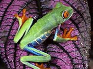 蟒蛇毒蛙野生動物高清合集