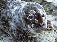 动物特写 可爱的小海豹