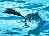 海洋精灵 海豚