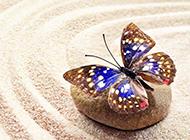 鹅卵石上的蝴蝶唯美图片