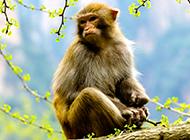 身手矫捷的心爱猴子图片
