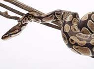 網友提供海量蛇高清圖片
