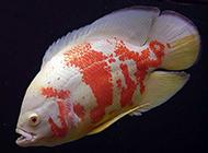 白地图鱼姿态优雅图片
