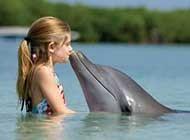 可爱友善的海豚高清桌面壁纸