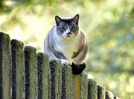超萌可爱的猫高清图片