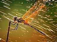 特写夏天美丽的蜻蜓