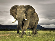 非洲大象野生动物壁纸高清精选