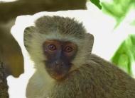 猴子圖片大全 猴子的情懷