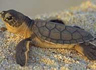 慢条斯理的可爱乌龟动物壁纸