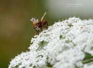 春日清新花园鲜花昆虫微距特写图片