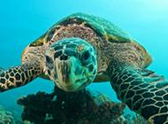 聪明的乌龟高清特写图片
