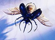 奇怪的昆虫高清摄影图片