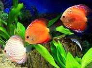 美丽的小金鱼色彩斑斓
