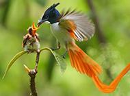 动物世界鸟类全集 有爱的翠鸟哺乳图片