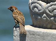 小型鸟类图片可爱的麻雀特写