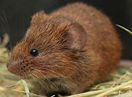 田鼠的簡易新家圖片