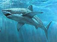海中描寫 鯊魚