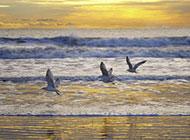 海鸥飞翔图片精美摄影作品