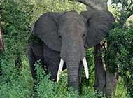 网友拍摄大象打架高清图片