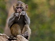 可爱萌猴子山林摄影图片