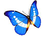 美丽花蝴蝶高清组图