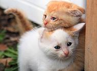 抱在一起的中華田園貓幼崽圖片
