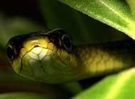 特寫 五彩斑斕的蛇