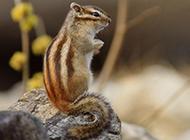 可爱机灵的松鼠图片