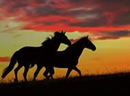 草原上的马唯美意境图片