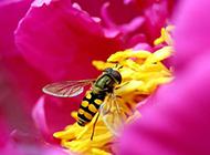 唯美的鲜花和蜜蜂摄影图片