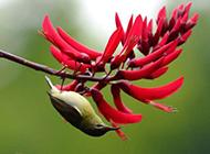 美丽蜂鸟图片高清鸟类摄影特写