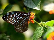 伫立枝头的花蝴蝶图片
