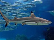 水族館內的觀賞小鯊魚圖片