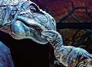 威风凛凛的恐龙高清图片