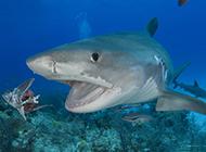 大鯊魚深海捕食圖片