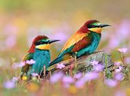 高清鸟类壁纸春天丛林近距离特写