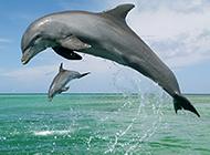 人类的挚友海豚高清图片欣赏