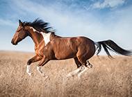 奔驰的骏马高清图片欣赏