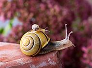 高清蜗牛摄影特写图片素材