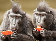 兩只萌萌的猴子高清圖片