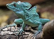 小型蜥蜴图片身体色彩丰富