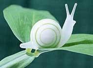 努力奋斗的蜗牛可爱动物大图