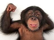 顽皮的珍贵大猩猩图片