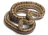 最凶的蛇类动物高清图片