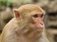 可愛機靈猴子高清攝影圖片