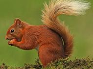 可爱小松鼠吃坚果的图片