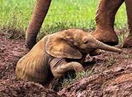 大象温情感情的场景