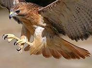 老鷹長頸鹿高清動物圖片