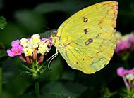 色彩斑斓的蝴蝶图片素材